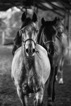 #clever #horses