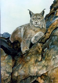 Lynx Art -- Sue Warner - Peintre et Dessinatrice Animalière - Huile - Lynx