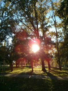 Novi Sad, Limanski park