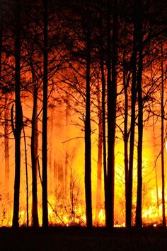 Free Image on Pixabay - Forest Fire, Trees, Nature, Fire Fire Tornado, Fire Drawing, Fire Image, Fire Painting, Wildland Fire, Fire Photography, Background Drawing, Wild Fire, Fire Art