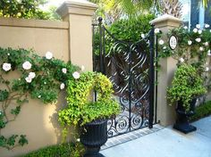 Gate and Topiaries