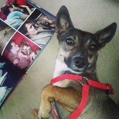 #Tosia lubi Printu :) Jak to mówią: pies poznaje się na dobrych ludziach i... dobrych fotoksiążkach też :) #instabook #instalove #Printu