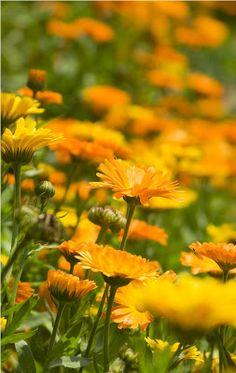 27 Medicinal Plants Worth Garden Space