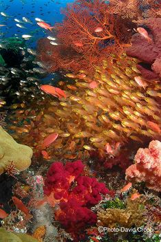 The most perfect places are under the sea. Halmahera Island - North Maluku.