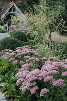 NGS Hill Farm Box, Stipa gigantea, Sedum Arthur Road Landscapes