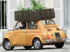 "#Fiat 500 with ""garden"" on the roof"