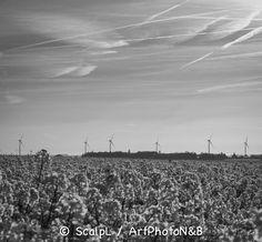 Centre-Val-de-Loire_6 © ScalpL / Art' Photo N&B Série complète sur : www.artphotonb.com Tirage photo noir et blanc argentique sur papier baryté d'un original numérique couleur. #tiragephoto #tiragenoiretblanc #noiretblanc #argentique #tirage #photo #noir #blanc #papierbaryte #fiber #fiberpaper #artphotonb #blackandwhite #bw #bnw #monochrome #photonoiretblanc #photographienoiretblanc #blackandwhitephotography #bnwphotography #argentik #analogue #analogic #analogicphoto #france #centre…