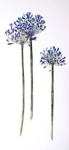 Aganthus ~ Mary Clare Cornwallis