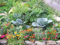 looks so full and beautiful, i bet you wouldn't notice if i hadn't weeded either