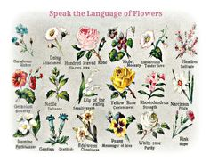 Speak the Language of Flowers. From an early 1900's postcard