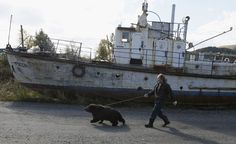 Alexander Kharatokin walks with a 9-month-old brown bear named Masha after it bathed in the Yenisei River outside Krasnoyarsk, Siberia. Kharatokin, a homeless man and a watchman of a mooring, lives in a wooden hovel near the river. Under the permission of his employer, Kharatokin adopted the orphan bear that was found this spring. He plans to continue living with the bear, who will be moved to a new larger enclosure after it is constructed. via the Atlantic
