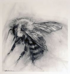 April Coppini's charcoal drawings are amazing. I do love charcoal. Drawing Faces, Drawing Sketches, Art Drawings, Pencil Drawings, Sketching, Bee Drawing, Drawing Tips, Cartoon Drawings, Charcoal Art