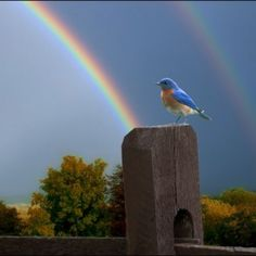 equisite-animals-bird-rainbow