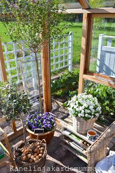 Kanelia ja kardemummaa: kasvihuone  Toukokuu2012