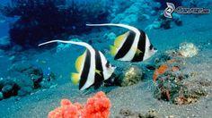 Bildergebnis für korallenriff fische