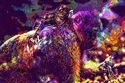 "New artwork for sale! - "" Young Animal Monkey Barbary Ape  by PixBreak Art "" - http://ift.tt/2vi4pDX"