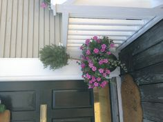 petunia topiary container