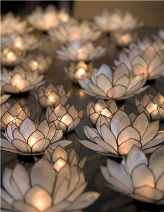 Lotus lights