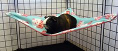 I wonder if my little guys would use a Guinea Pig hammock ♥