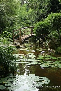 Japanese Garden at Zilker Botanical Gardens, Austin