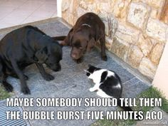 Dogs And Cats Looks Very Funny - 15 Photos - Wackyy Silly Dogs, Funny Dogs, Cute Dogs, Funny Memes, Memes Humor, Cat Memes, Funny Animal Pictures, Cute Funny Animals, Funny Cute