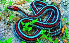 snakes - Pesquisa do Google