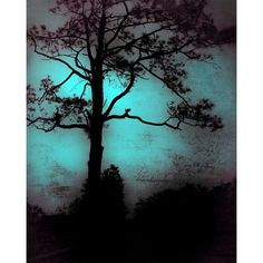 wall art, home decor, Fine Art Print blue, dark, mood, mysterious,... ❤ liked on Polyvore featuring home, home decor, wall art, blue home accessories, landscaping trees, wall home decor, silhouette wall art and tree wall art