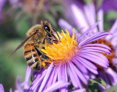 Fantastic Beekeeping