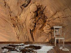 Holz Fototapet, realistisch echt, Architects Paper Fototapete «Querschnitt eines Baumstammes» 470428