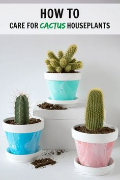 After recently sharing how to create mini marbled painted pots, I wanted to follow that post up with a little something about caring for the cacti inside them.  After all, there's little point in having a pretty pot if the plant inside is left to fend for itself!  Now, most houseplants are pretty easy to [...]