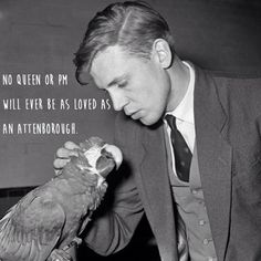 Sir David Attenborough born this day in 1926 seen here petting a macaw ca. David Attenborough Young, Gq Magazine, Hot Hunks, Historical Images, Natural World, Natural Life, All About Time, Britain, Actors