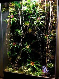 Gecko Terrarium, Moss Terrarium, Aquarium Fish Tank, Planted Aquarium, Tropical Terrariums, Vertical Planter, Vertical Gardens, Cool Fish Tanks, Reptile Enclosure