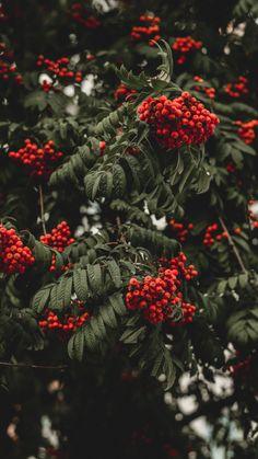 Garden Wagon, Garden Hose, China Garden, Garden Nursery, Red Fruit, Glass Animals, Natural Home Remedies, Herbal Remedies, Medicinal Plants