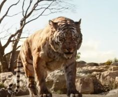 isney has released a new clip from the upcoming live-action The Jungle Book allowing Shere Khan to make a grand entrance. See it on FangirlNation.