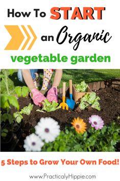 start an organic vegetable garden