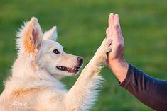 dog loving photography - Pesquisa Google