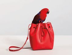 Mansur Gavriel Cast a Bunch of Sloths in Their S/S 15 Campaign via @WhoWhatWear