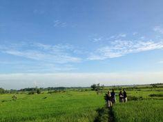 Green Wide Ricefield at Winong, Pati