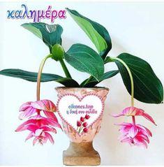 Γλυκιά καλημέρα με υγεία και ζεστά χαμόγελα πάντα και με όμορφες εικόνες τοπ!!!! Planter Pots, Plant Pots