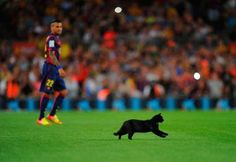 cat - Denis Doyle/Getty Images