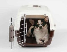 Putting safety first when purchasing a carrier is of the utmost importance.