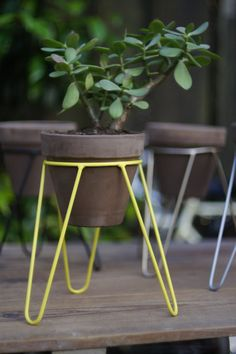 Modern in design and small in size, this yellow steel tripod plant stand is perfect for small plants and herbs. Metal Plant Stand, Modern Plant Stand, Plant Stands, Small Plant Stand, House Plants Decor, Plant Decor, Small Plants, Indoor Plants, Wrought Iron Decor