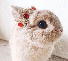 Royal bunny