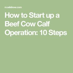 How to Start up a Beef Cow Calf Operation: 10 Steps