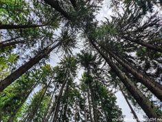Codrul Secular Slătioara, comoara ascunsă a Bucovinei Ursula, Montana, Plants, Cabin, Flathead Lake Montana, Plant, Planets
