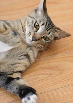 少し暑くなってきてミーは床の上が気持ち良さそうです。 動くものがあると興味しんしんに少し警戒しな...