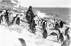 This is Australian photographer Frank Hurley amongst a group of Antarctic penguins. Next to the wildlife and vast emptiness, Hurley looks insignificant when compared to the world explorers were trying to master.