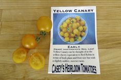 Heirloom tomato varieties we grow in a northern garden - Yellow Canary