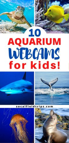 Teach your children about the ocean and the animals that live in the sea by watching one of these 10 Aquarium Webcams For Homeschooling! Indoor Activities For Kids, Educational Activities, Learning Activities, Engage In Learning, Kids Learning, Ocean Lesson Plans, Home Teaching, Virtual Field Trips, Stem For Kids