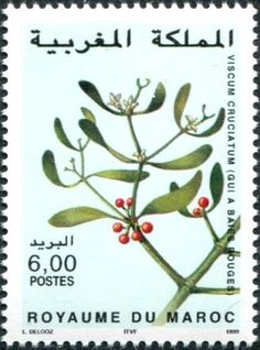 Only Colnect automatically matches collectibles you want with collectables other collectors swap. Colnect collectors club revolutionizes your collecting experience! Flower Stamp, Flora, Postage Stamps, Mistletoe, Switzerland, Collections, Morocco, Seals, Plants